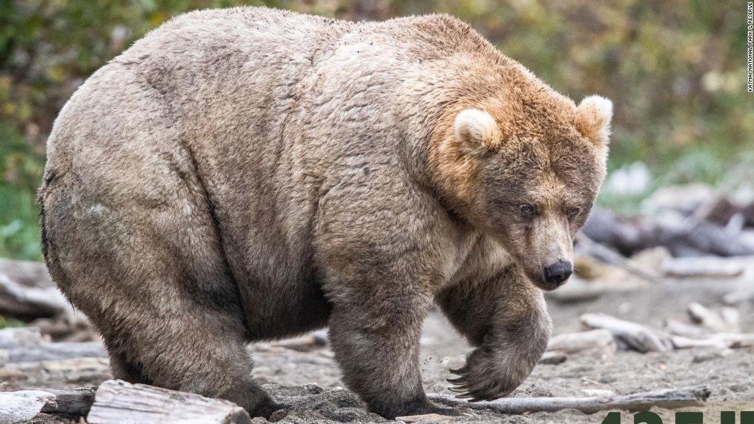 Ведмедиця Голлі