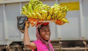 Как выбрать правильный банан: главное о тропическом плоде в одной инфографике