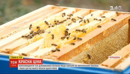 Красная цена: сколько меда собрали на украинских пасеках и каких цен ждать на его