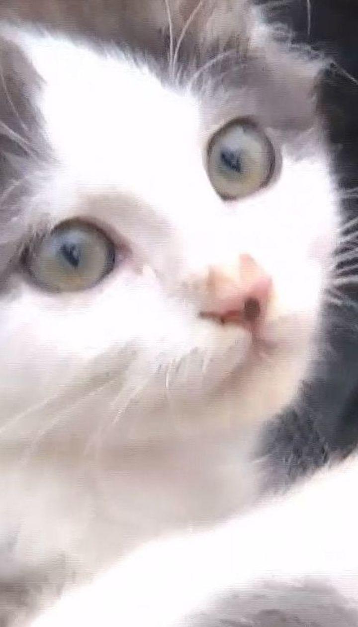 Жители двух улиц в Ковеле утверждают, что их котов вылавливает и убивает сосед