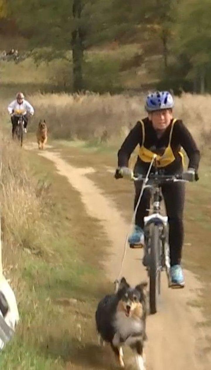Спорт для собак и их хозяев: в Киеве состоялись соревнования по драйленду