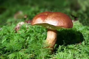 Неурожай и дефицит: в Украине выросли цены на грибы