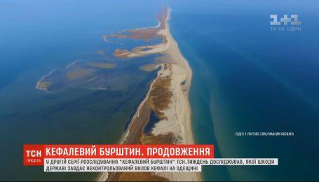 """""""Кефалевый янтарь"""": какой ущерб государству наносит неконтролируемый вылов кефали в Одесской области"""