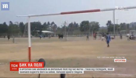 В Аргентине бык ворвался на футбольное поле прямо во время игры