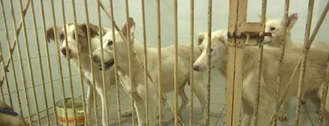 Жители столичной многоэтажки восстали против соседа, который десять лет держит в квартире собак
