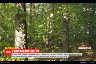 Тернопольские агрономы разработали эликсир для быстрого роста дубов