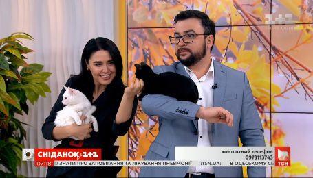 Двое котят ищут заботливых хозяев