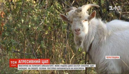 На Черниговщине две сестры-врача превратили больничный двор в пастбище для собственных коз