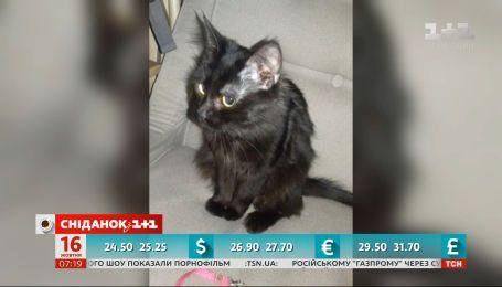 Освобожденный моряк Андрей Эйдер забрал кошку из приюта
