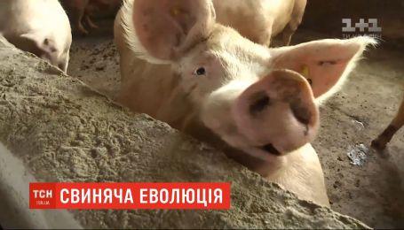 Свиньи в парижском зоопарке научились копать землю палками