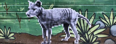 В Австралії люди бачать сумчастого вовка. Він вже 80 років вважається вимерлим