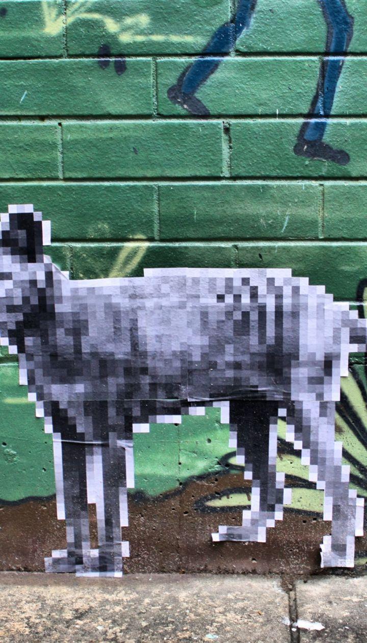 В Австралии люди видят сумчатого волка. Он уже 80 лет считается вымершим