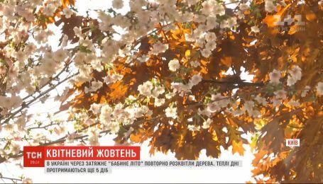 """Через """"бабине літо"""" у Києві зацвіла сакура"""
