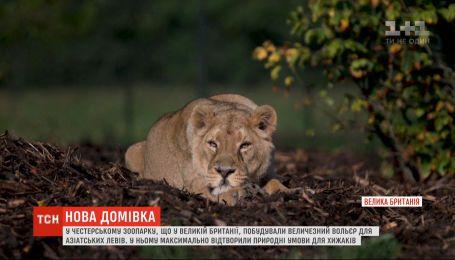 Для азиатских львов открыли вольер, максимально приближенный к условиям дикой природы