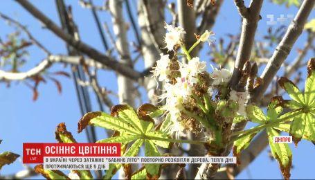 """В Украине из-за затяжного """"бабьего лета"""" повторно расцвели деревья"""