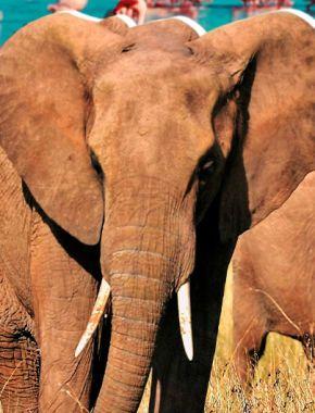 Сафари в Кении: как организовать незабываемую поездку