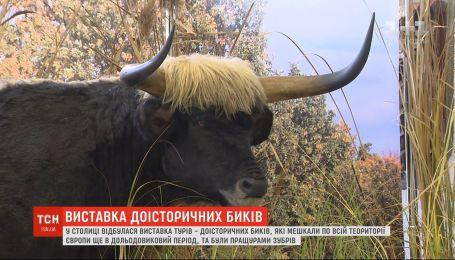 В Киевском дворце детей и юношества открыли выставку, посвященную первобытному быку