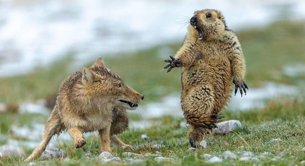 Лучшие фото дикой природы 2019: победители конкурса