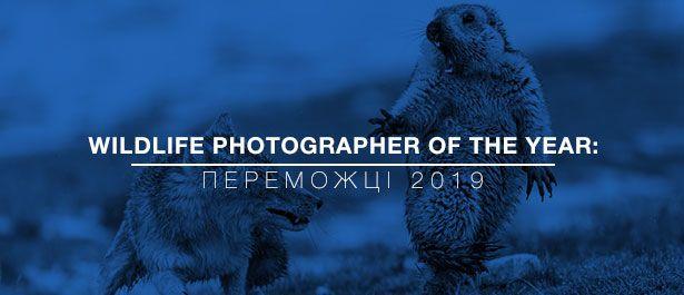 Лучшие фото дикой природы 2019: победители конкурса Wildlife Photographer of the Year