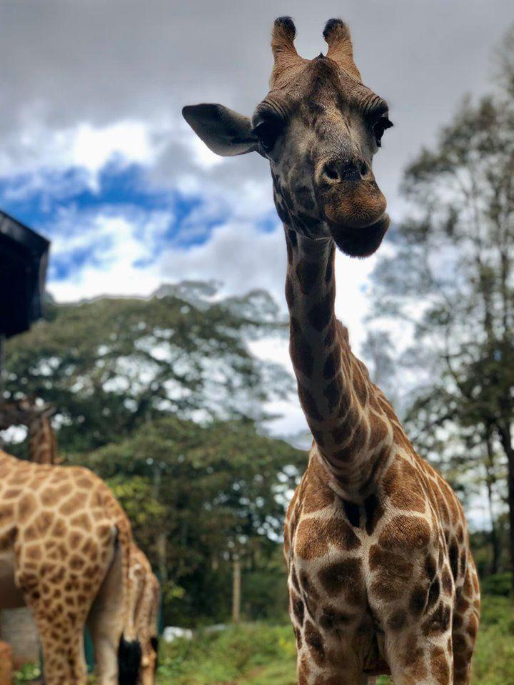 Кенія, для блогів_4