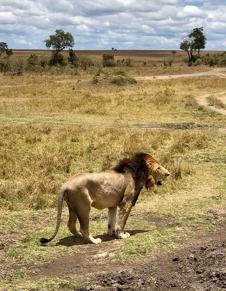 Кенія, для блогів_8