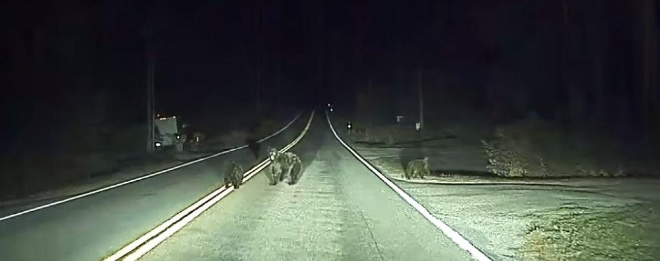 Tesla в режиме автопилота распознала в темноте медведицу с медвежатами и спасла им жизнь