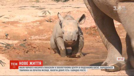 Маленького черного носорога показали в китайском зооцентре