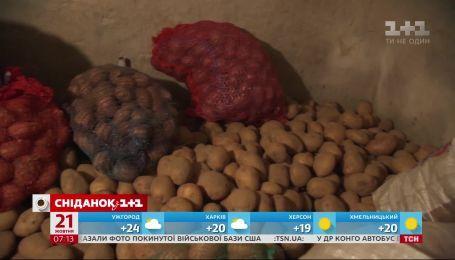 В Украине в течение последней недели упали цены на картофель - экономические новости