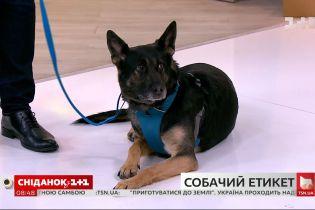 Как правильно вести себя с неизвестными собаками и о чем должны помнить их владельцы - кинолог Владислав Плахтий