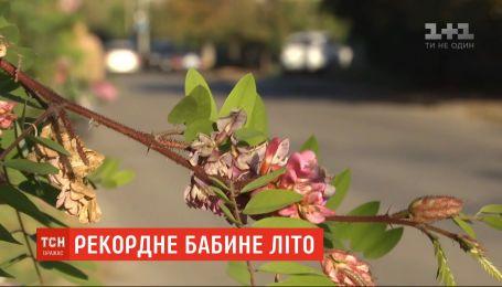 """В этом году """"бабье лето"""" в Украине побило все рекорды"""