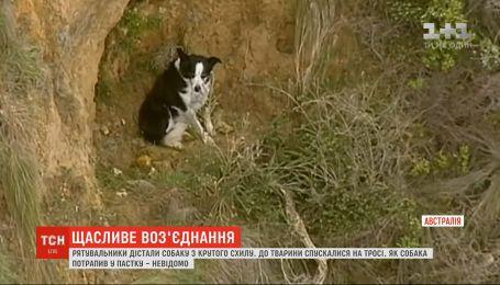 Рятувальники дістали собаку з крутого схилу в австралійському штаті Вікторія