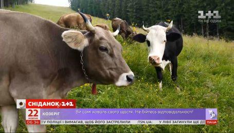 Импортные молочные продукты заполонили украинский рынок