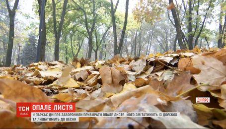 Горсовет Днепра принял решение о запрете уборки опавших листьев