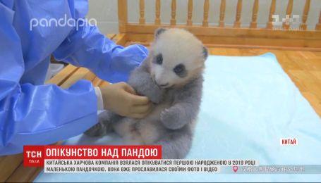 Китайская пищевая компания официально усыновила маленькую панду