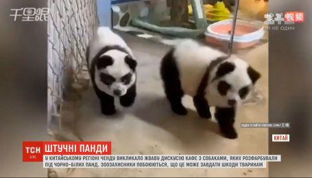 В Китае вызвало дискуссию кафе с собаками, которых раскрасили под черно-белых панд