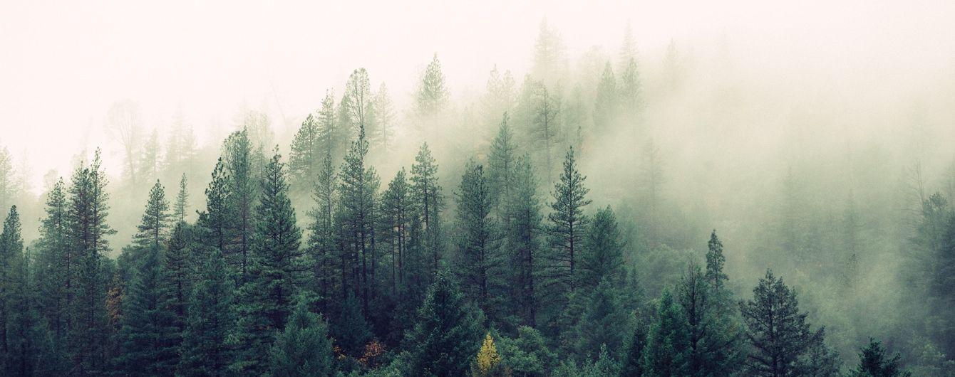 Опасный туман, дожди и до +16 градусов: погода на вторник