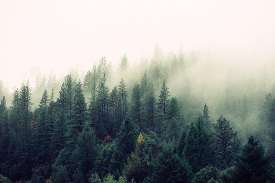 Зранку туман, а вдень до 17 градусів тепла: погода на середу