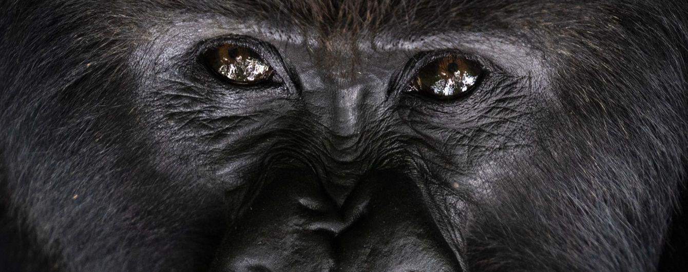 В США от коронавируса начали вакцинировать обезьян