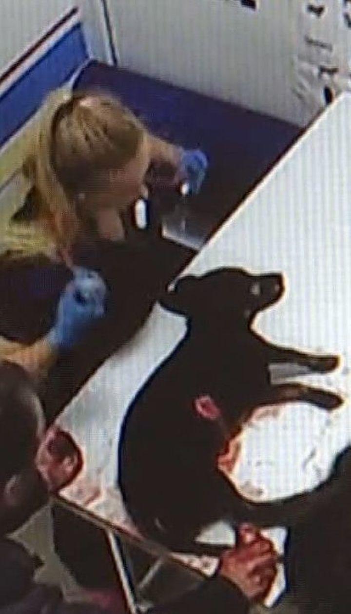 Киевлянин жестоко зарезал собаку своего друга, потому что она произвела потребность в его квартире