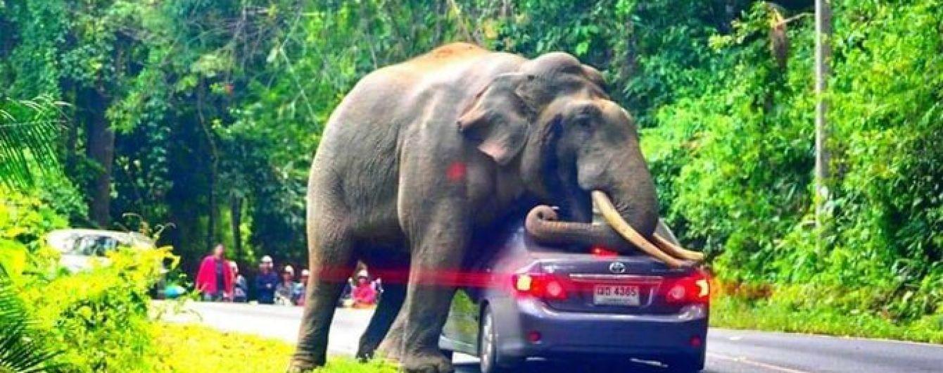 В Таиланде дикий слон прилег на автомобиль с туристами внутри