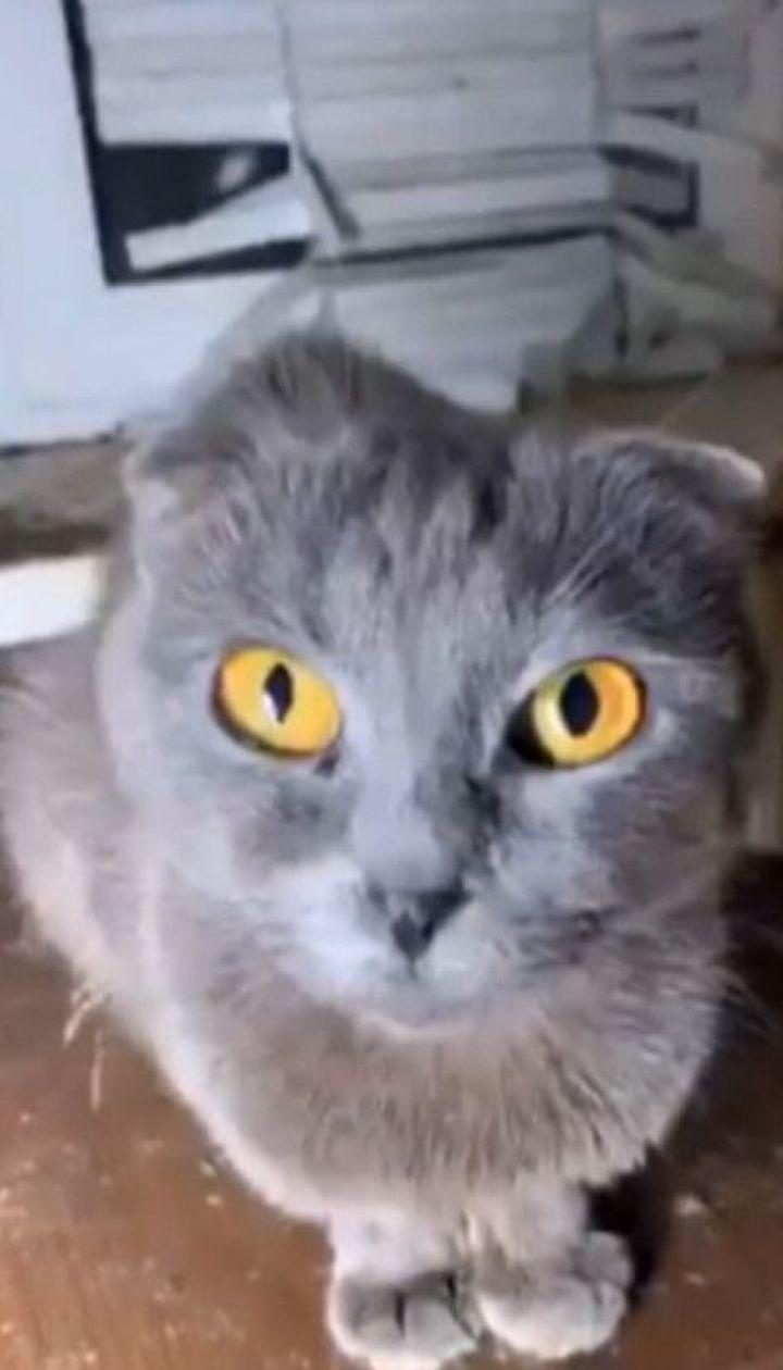 40 котів і собаку покинула мешканка столиці в орендованій однокімнатній квартирі