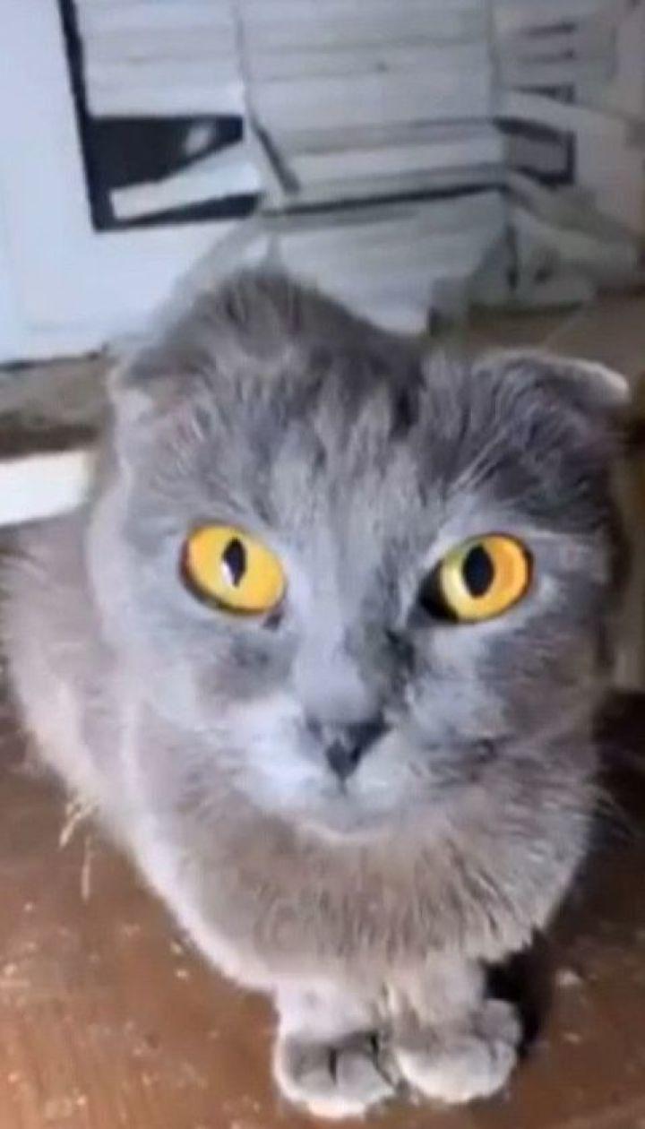 40 кошек и собаку покинула жительница столицы в арендованной однокомнатной квартире