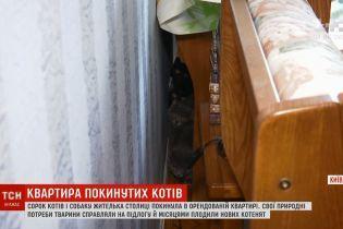 Киевлянка сдала в аренду квартиру и получила вместо денег 40 котов и собаку