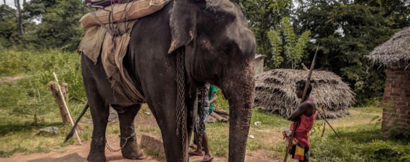 Скуті ноги та удари списом: на Шрі-Ланці слон-підліток помер від виснаження через туристів