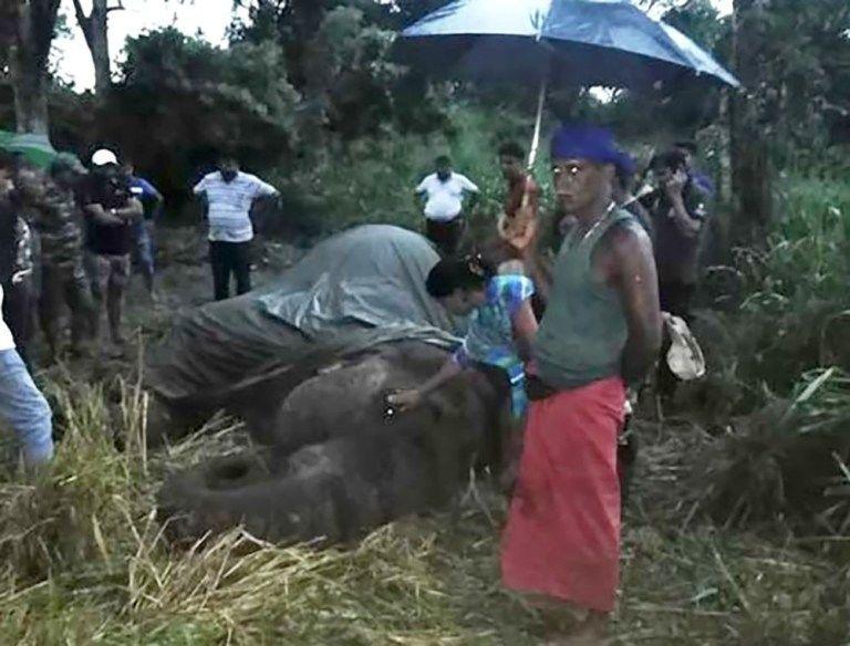 Загиблий на Шрі-Ланці слон_2