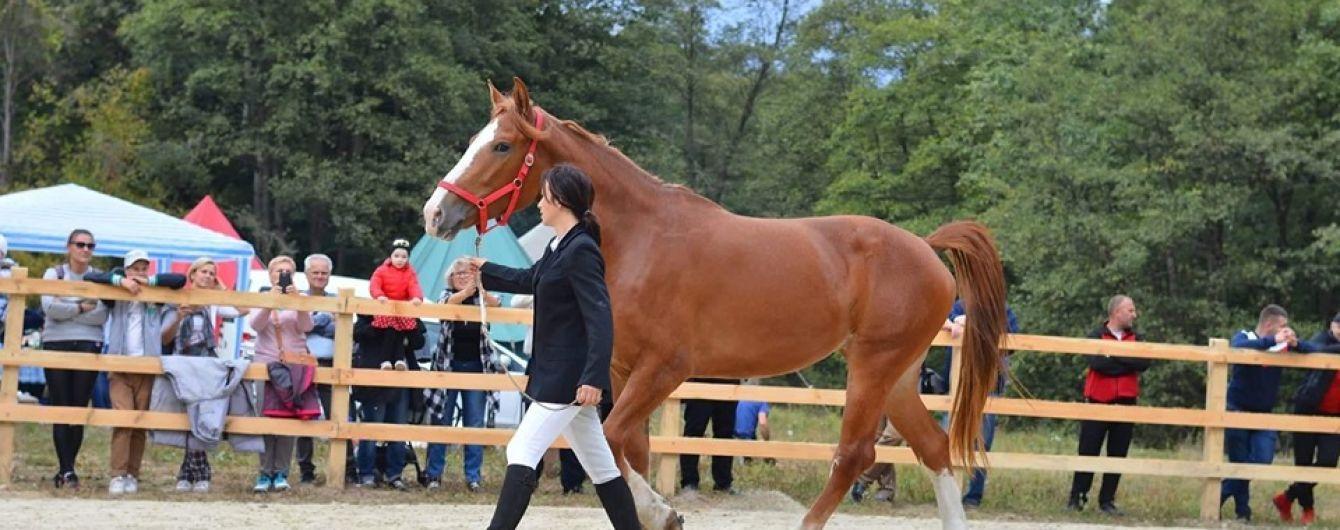 В Львове усыпили лошадь, которая испугалась салюта и травмировала подростка