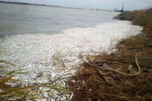 На Херсонщине заявили о массовом море рыбы в Днепре