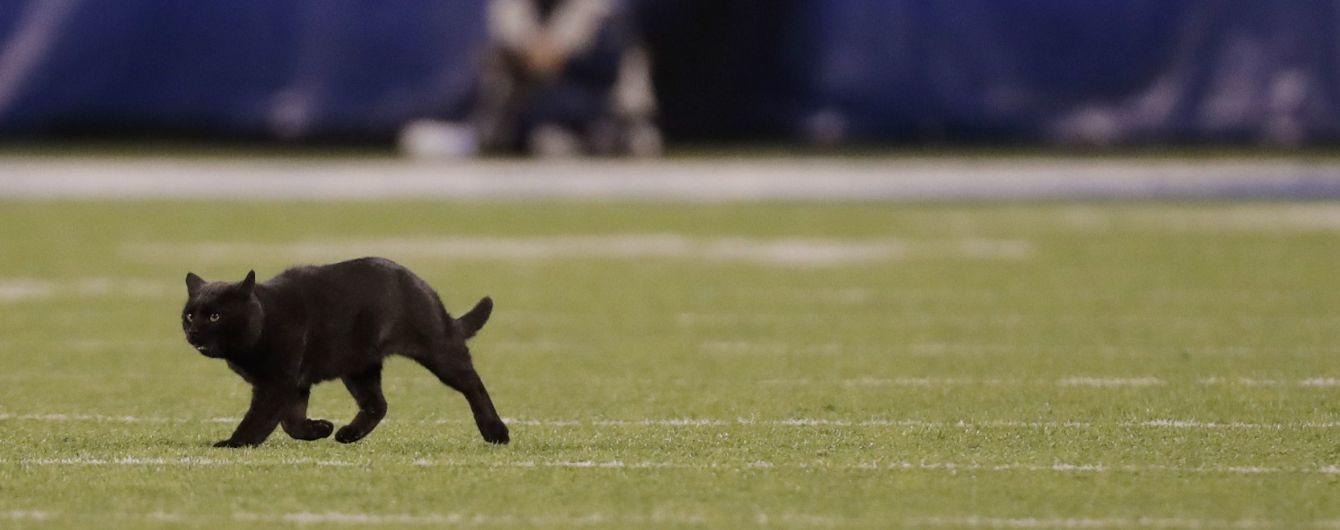 Мімімі дня. Пухкенький котик зупинив футбольний матч у США