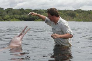 В опасных водах Амазонки Дмитрий Комаров отыскал редких розовых дельфинов