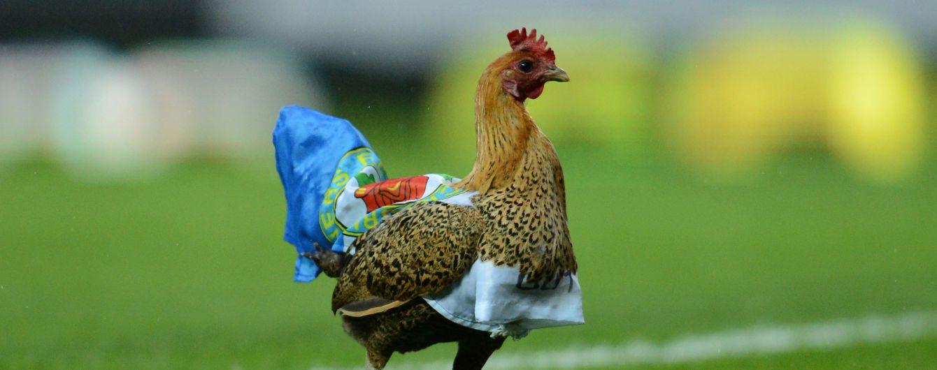 В Хорватии футболист убил курицу во время матча и получил красную карточку